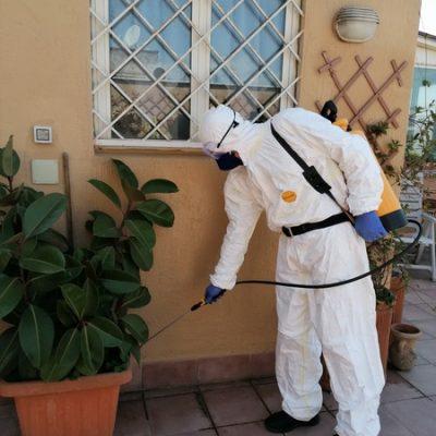 Disinfestazione-insetti-piante-giardino